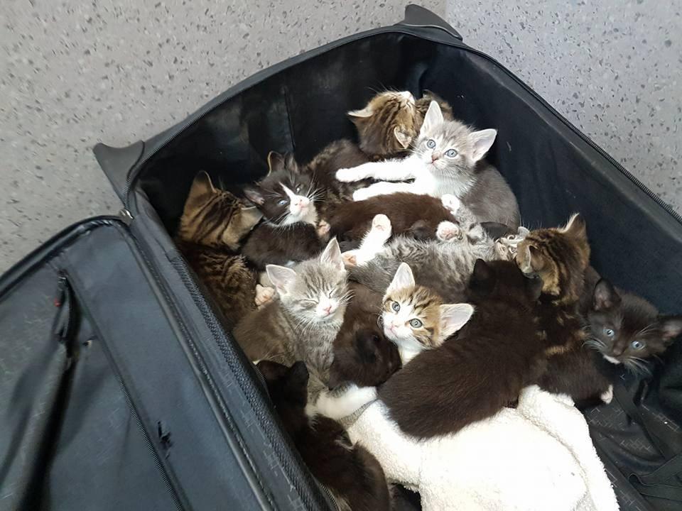 kittens-suitcase-417-1