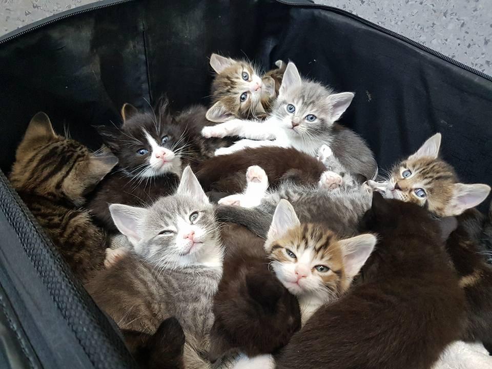 kittens-suitcase-417-2