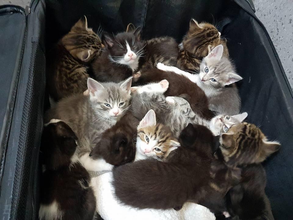 kittens-suitcase-417-3