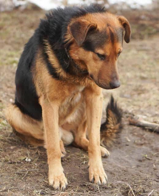 luke-chien-abandon-russie-1