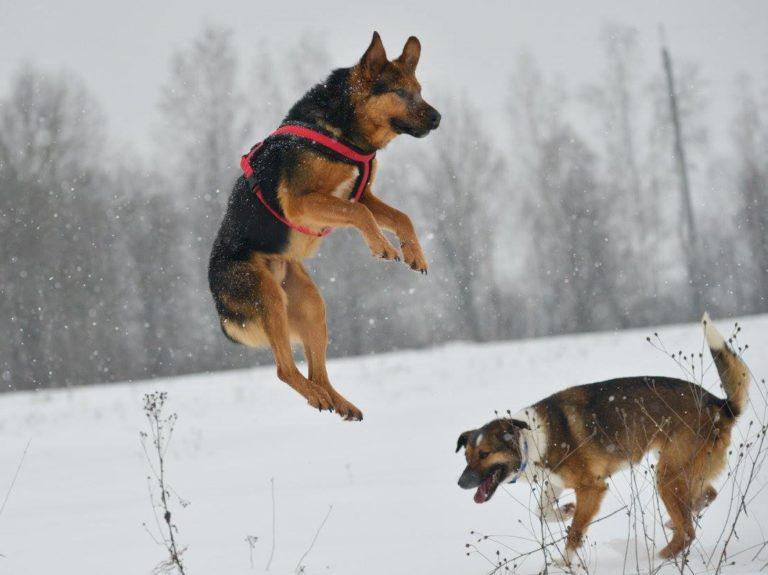 luke-chien-abandon-russie-2