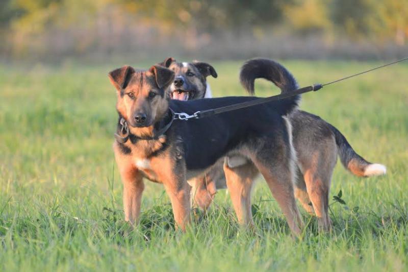 luke-chien-abandon-russie-3