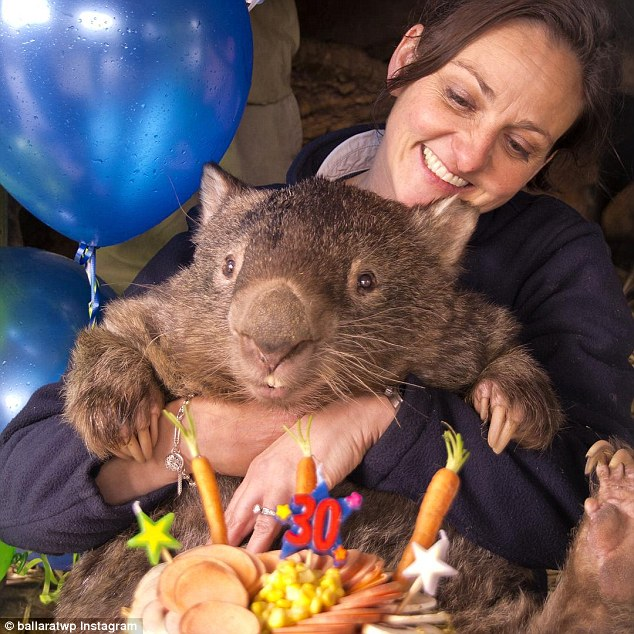 patrick-oldest-wombat-3