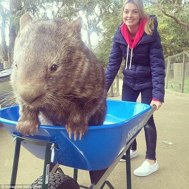 patrick-oldest-wombat-4