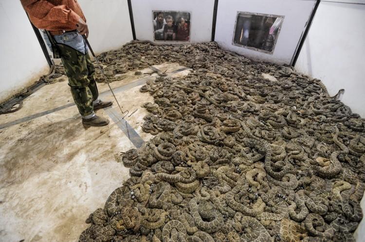 serpents-massacre-texas-1