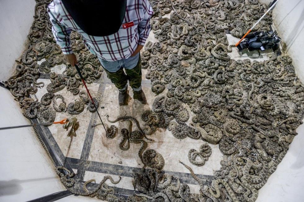 serpents-massacre-texas-2