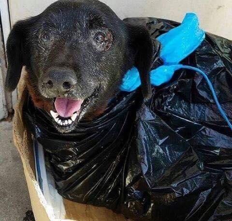 blackie-abandoned-trash-bag-1
