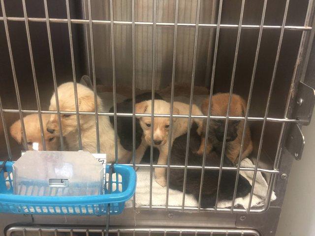 chienne-chiots-sauvetage-texas-2