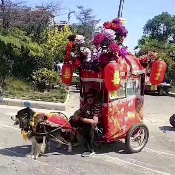 chiens-caleche-chien-maltraitance-1
