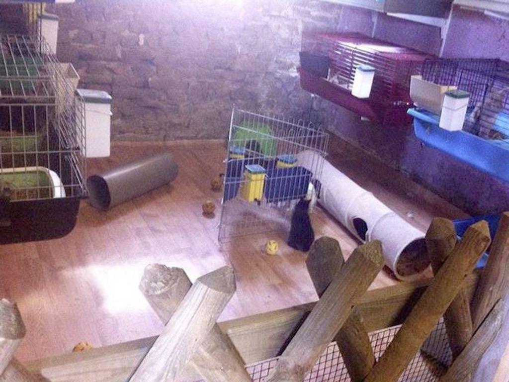 chloe-machado-refuge-lapins-isere-12