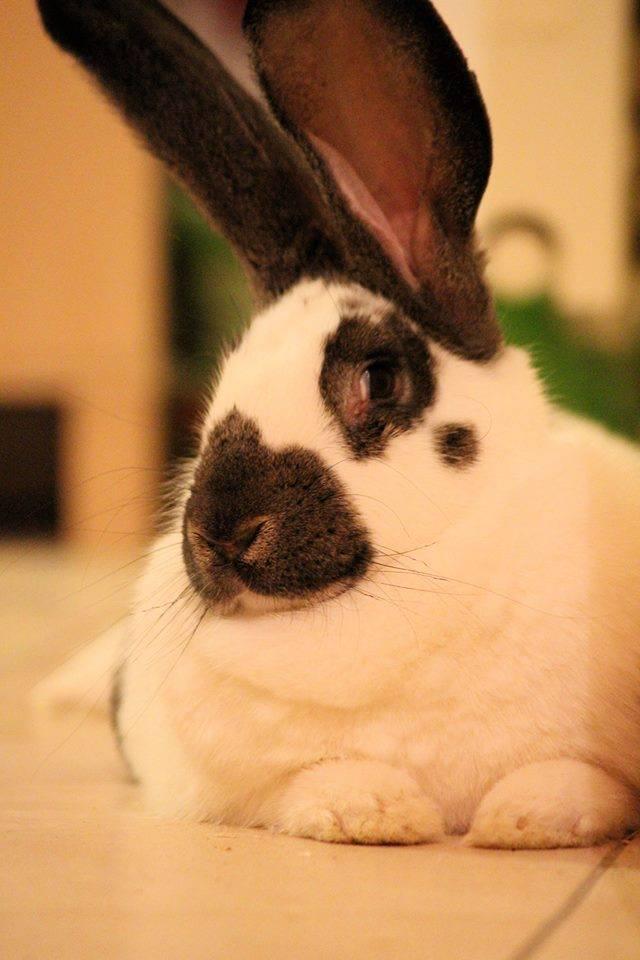 chloe-machado-refuge-lapins-isere-14