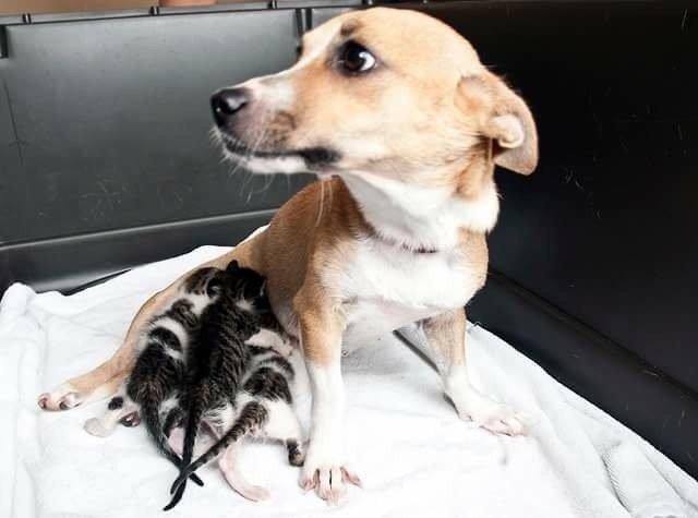 esperanza-chienne-chatons-sauvetage-1