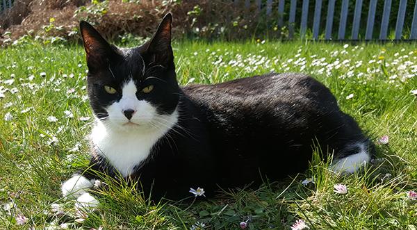 felix-cat-fell-tamise-1