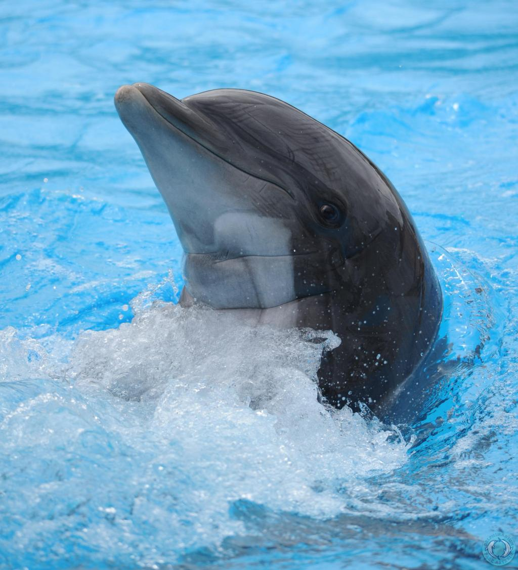 femke-one-voice-dauphin-parc-asterix-11