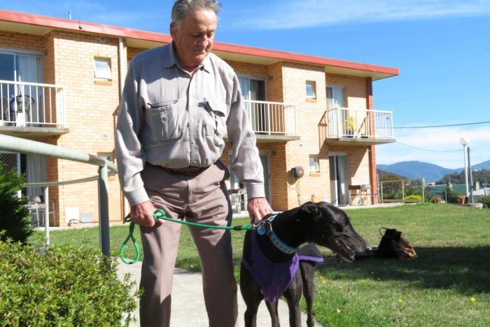 greyhound-retirement-home-2