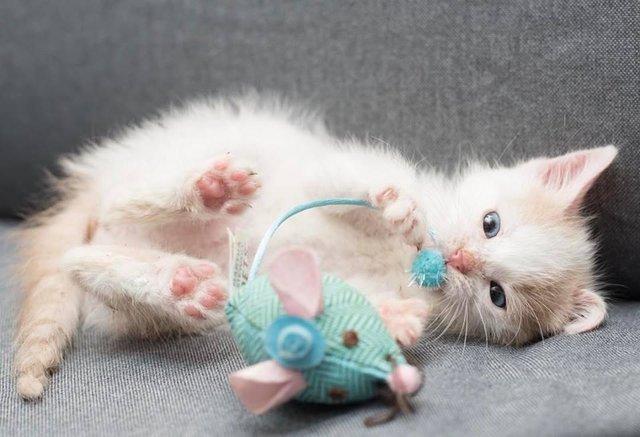 munay-kitten-peru-5