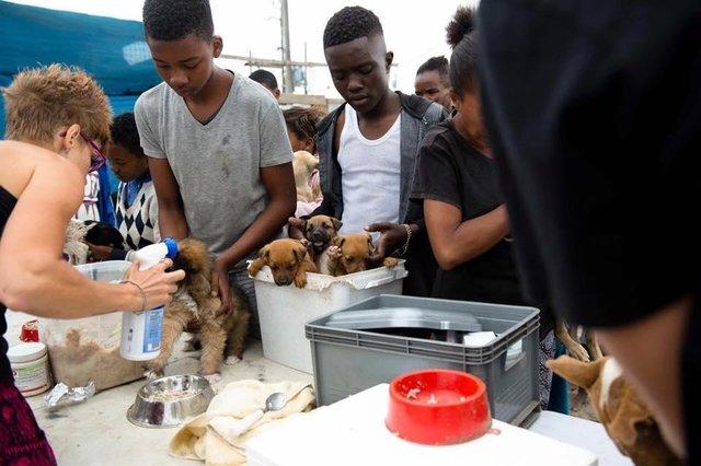 nanuk-chienne-sauvetage-afrique-du-sud-1