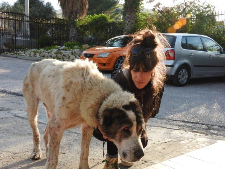 tina-senior-mange-dog-2