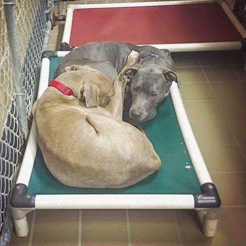hansel-gretel-inseparables-chiens-adoption-1