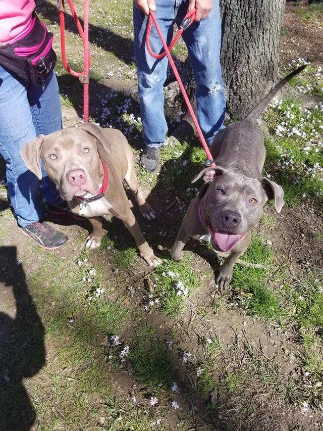 hansel-gretel-inseparables-chiens-adoption-3