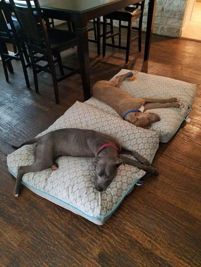 hansel-gretel-inseparables-chiens-adoption-5