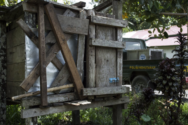 kotap-orang-outan-prisonnier-borneo-2