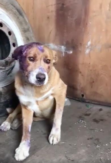lindo-dog-miami-1