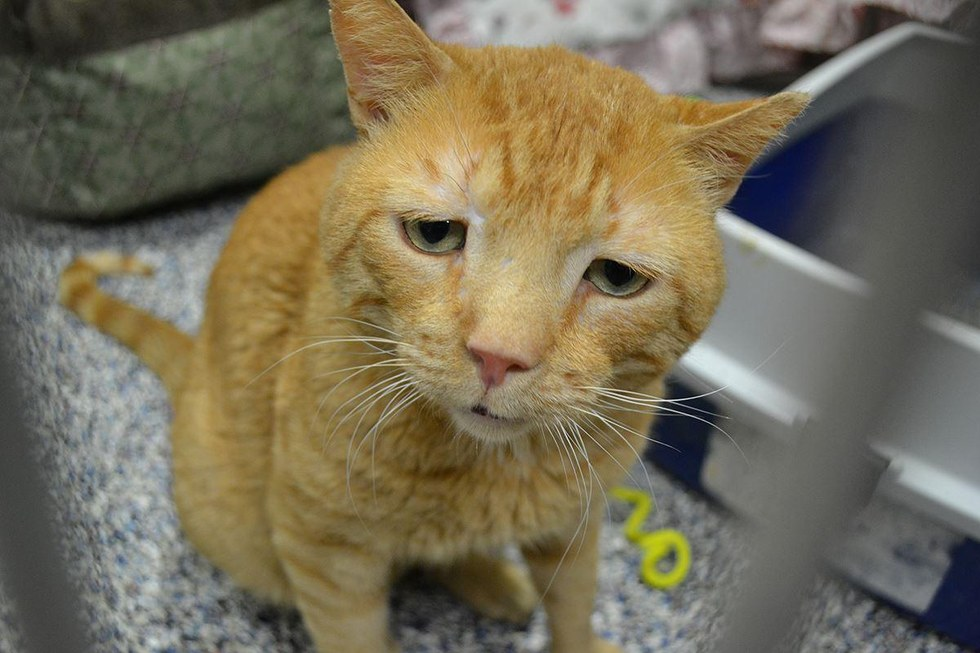 nutmeg-saddest-cat-adopted-1