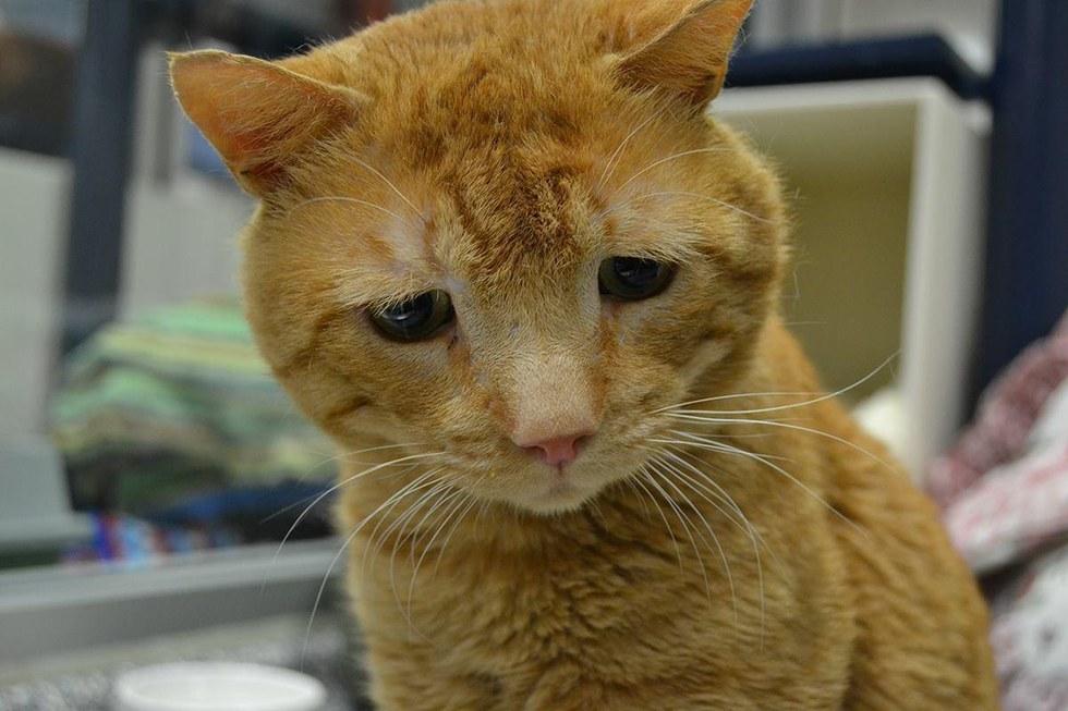 nutmeg-saddest-cat-adopted-2