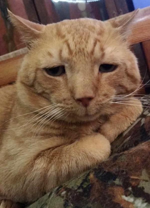 nutmeg-saddest-cat-adopted-4