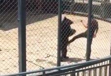 ours-battu-zoo-chine-1