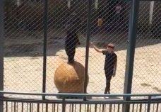 ours-battu-zoo-chine-3