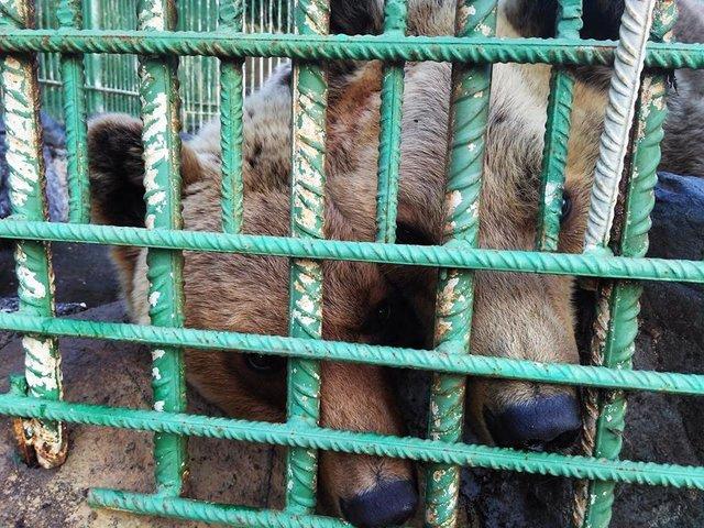ours-maltraitance-albanie-2