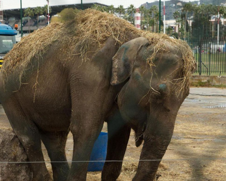 maya l'éléphante