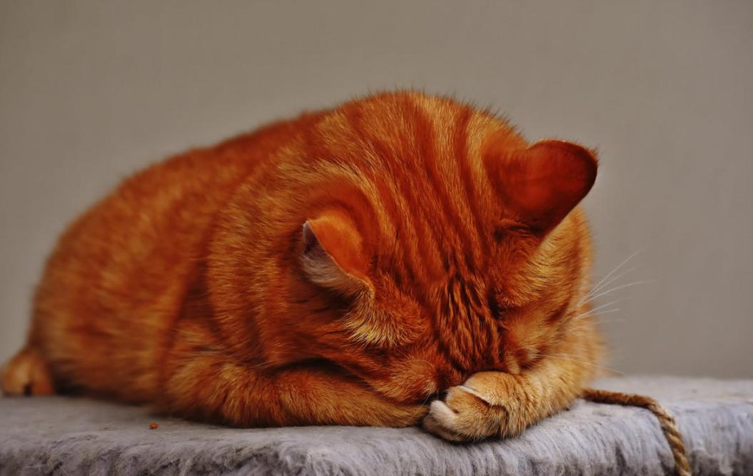 douleur du chat