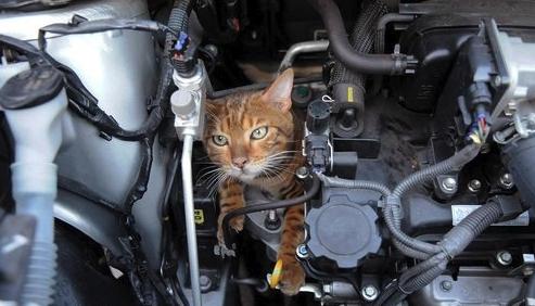 chat coincé moteur
