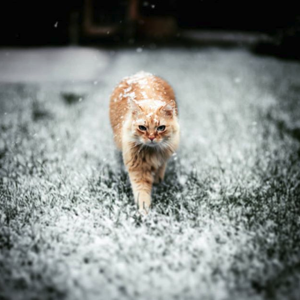 danger froid chat