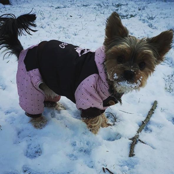 danger froid chien