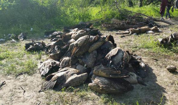 massacre vautours tanzanie