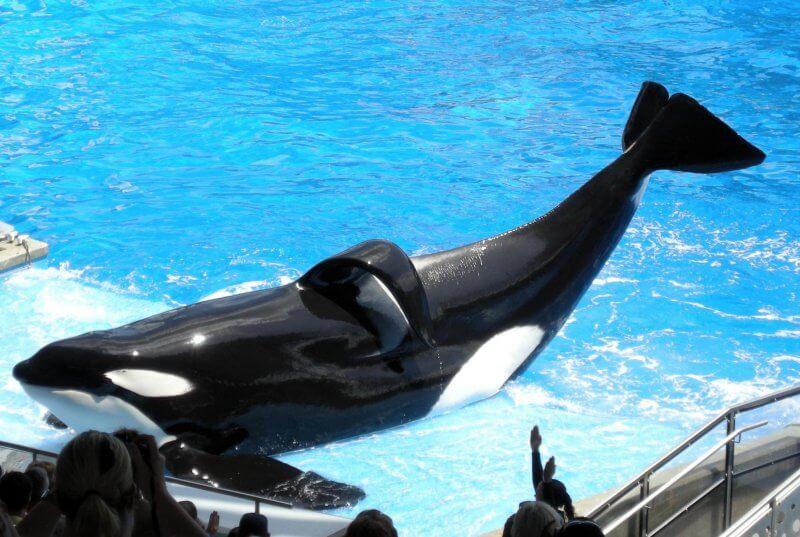 captivité orques