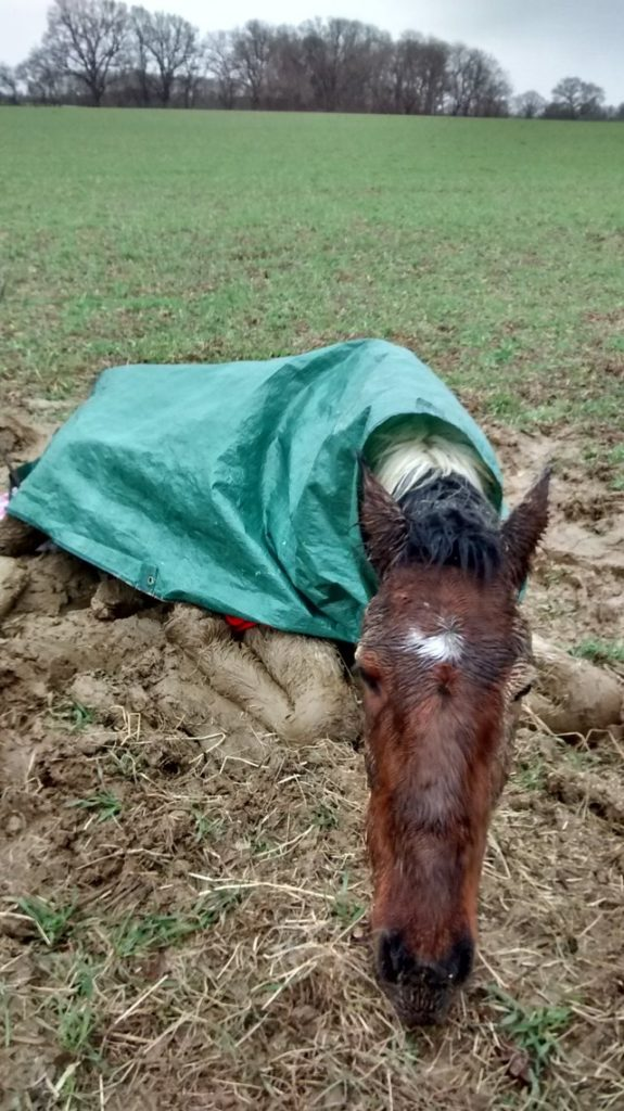 adie cheval abandonné champ