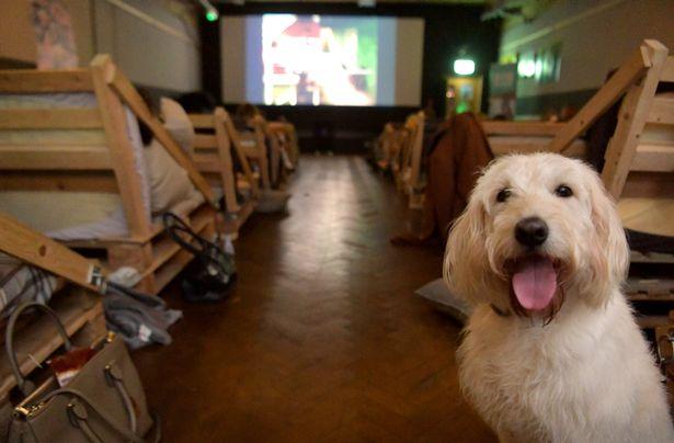 cinéma pour chiens