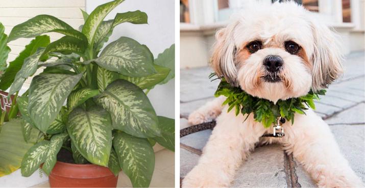 plante toxique chien