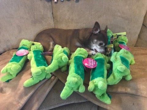jouet perdu chien