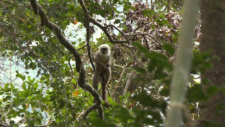lémuriens madagascar