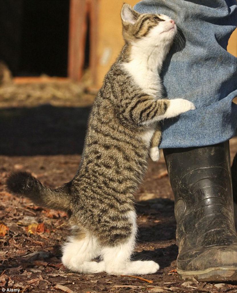 langage des chats