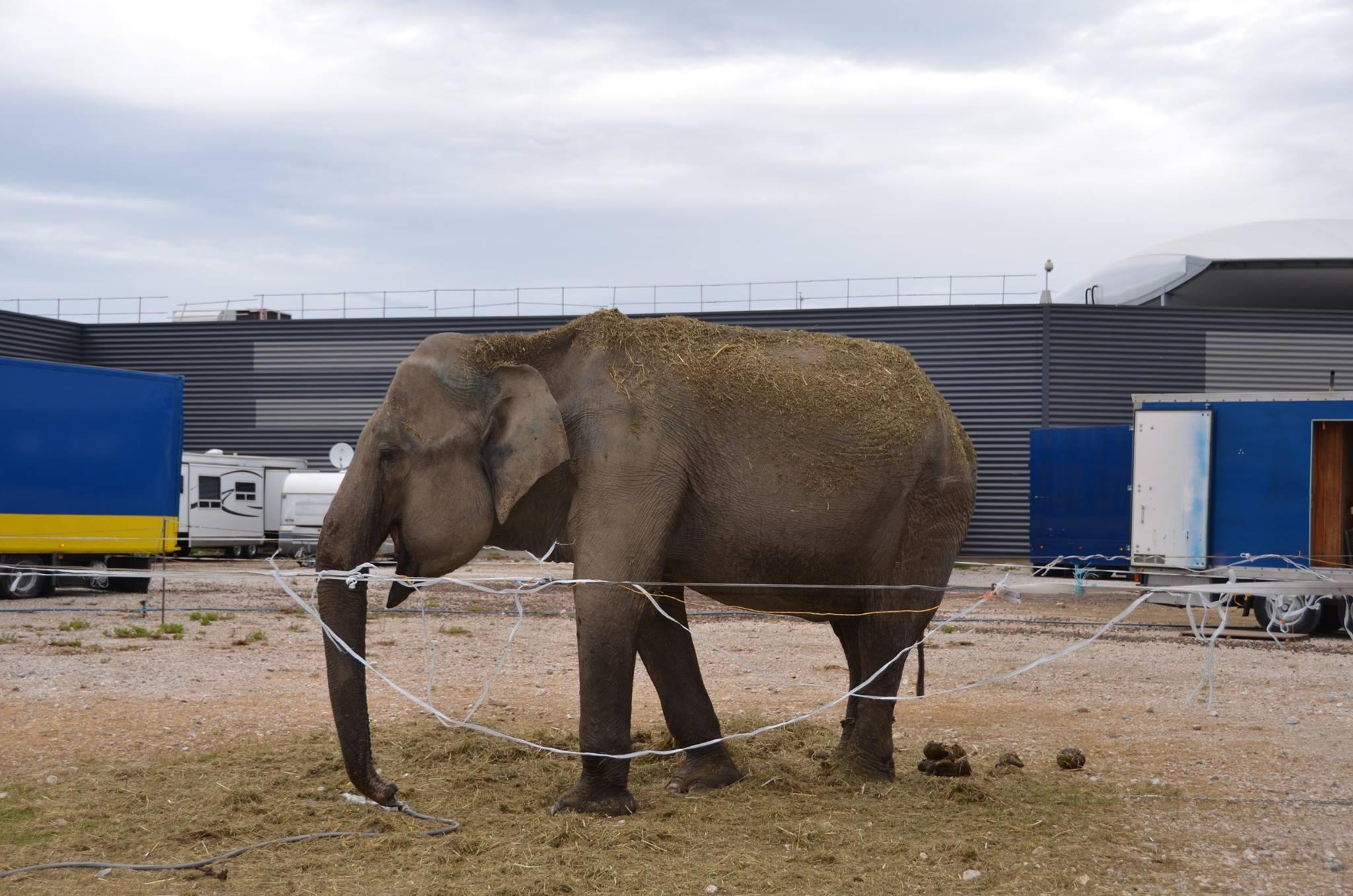cirque éléphant