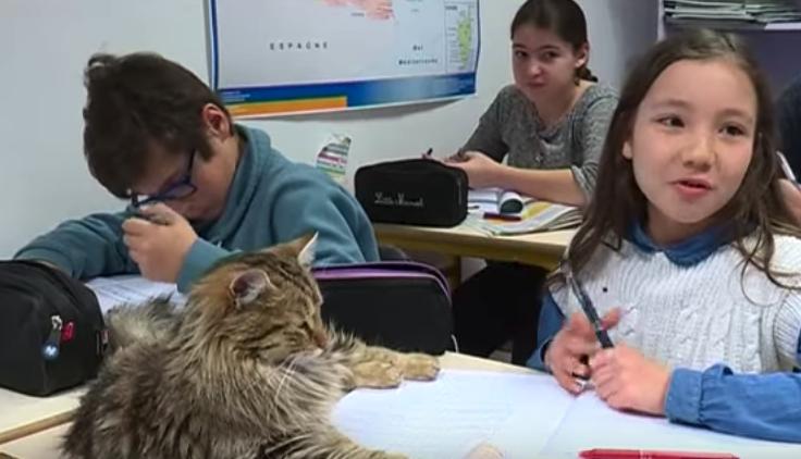 chats à l'école
