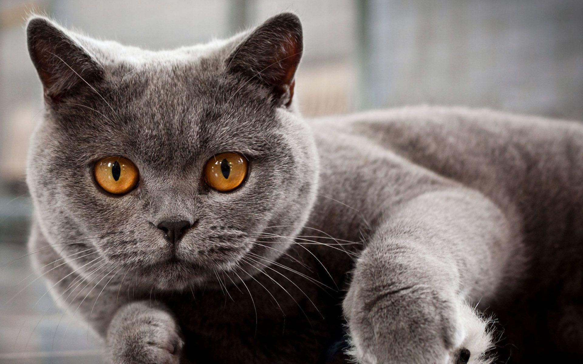 chat sans allergène