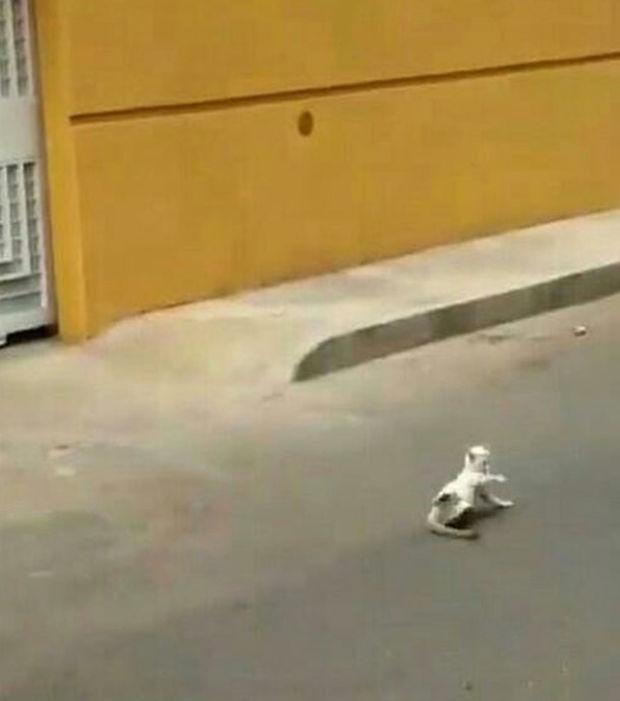 chat torturé vénézuéla